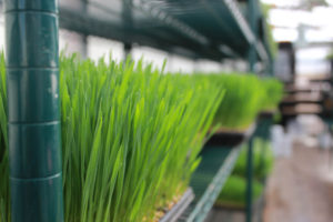 Microgreens Basics Workshop